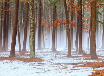 Long Island Pine-oak Forest Poster