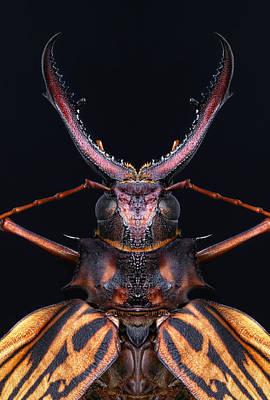 Longhorn Beetle Macrodontia Cervicornis Poster by Robert Jensen