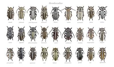 Longhorn Beetles Poster by F. Martinez Clavel