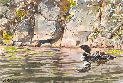 Loons At Eldrege's Rock Poster by David Gilmore