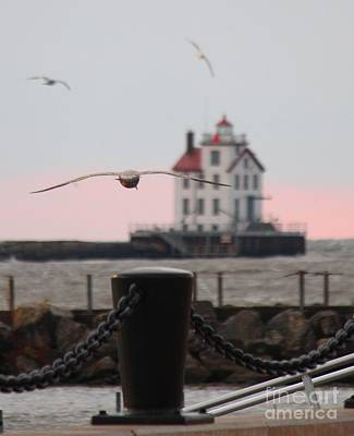 Lorain Lighthouse With Gulls Cropped Poster
