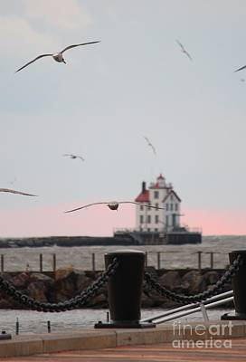 Lorain Lighthouse With Gulls Poster