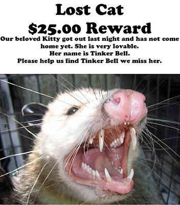 Lost Cat Cash Reward Poster