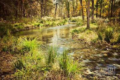 Lost Creek In Autumn Morning Poster by Iris Greenwell