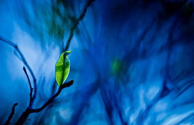 Lost In Blue Poster by Linda Unger