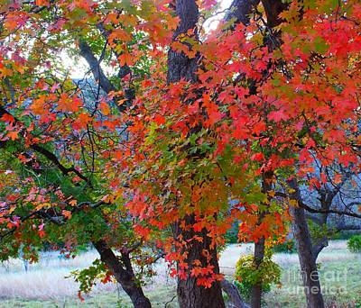 Lost Maples Fall Foliage Poster
