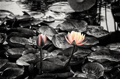 Lotus 4 Poster