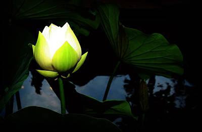 Lotus Flower 2 Poster