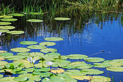 Poster featuring the photograph Lotus-lily Pond by Ankya Klay
