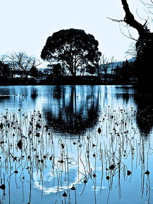 Lotus Pond Winter - 4 Poster by Larry Knipfing