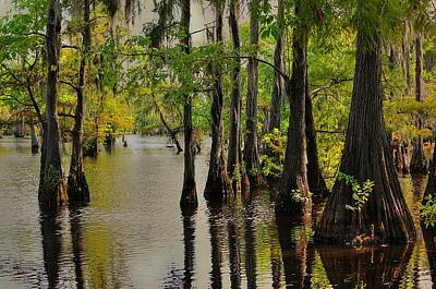Louisiana Cypress Swamp Poster by Ester  Rogers