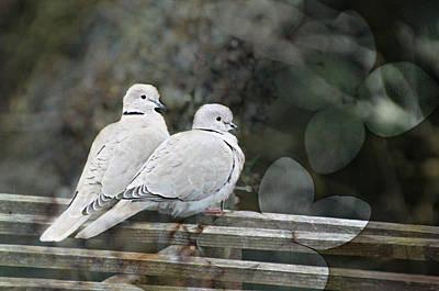 Love Birds Poster by Katie Wing Vigil