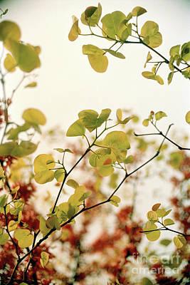 Love Leaf Poster