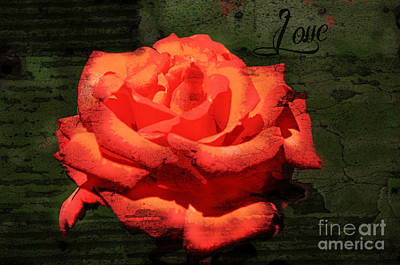 Poster featuring the photograph Love N Rose by Mindy Bench