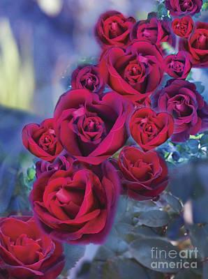 Loveflower Roses Poster by Alixandra Mullins