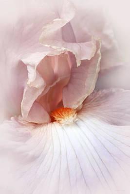 Lovely Lady Iris Flower Poster