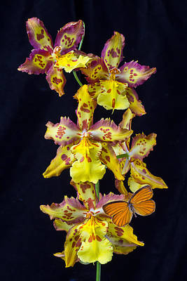 Lovely Orchid With Butterfly Poster