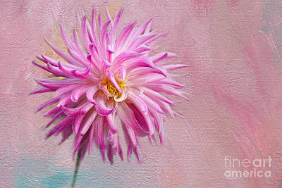 Lovely Pink Dahlia Poster