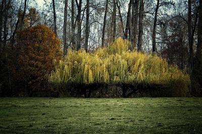 Lovely Willow Poster by Belinda Greb