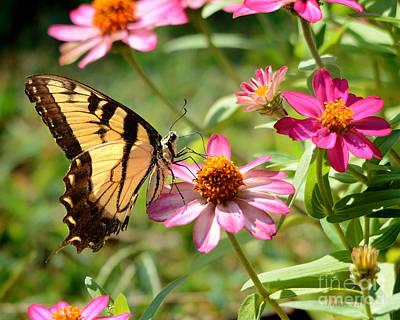 Loving Summer Garden Poster