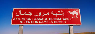 Low Angle View Of A Camel Crossing Poster by Panoramic Images