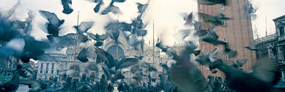 Low Angle View Of A Flock Of Pigeons Poster by Panoramic Images