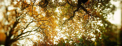 Low Angle View Of Autumn Trees Poster by Panoramic Images