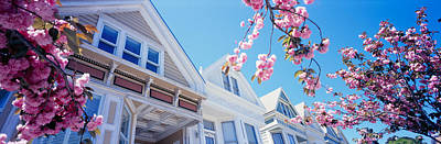 Low Angle View Of Cherry Blossom Poster by Panoramic Images