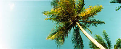 Low Angle View Of Palm Tree, Morro De Poster by Panoramic Images