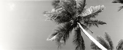 Low Angle View Of Palm Trees, Morro De Poster by Panoramic Images