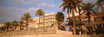 Low Angle View Of Palm Trees, Sitges Poster by Panoramic Images