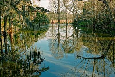 Low Country Swamp Poster