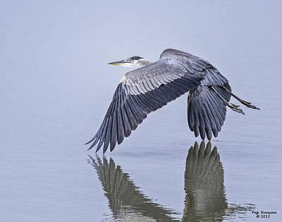 Low Flying Heron Poster