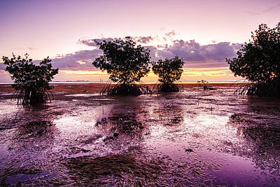 Low Tide Mangrove Poster