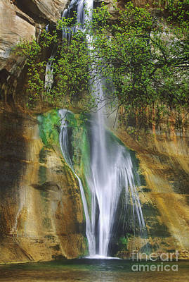 Poster featuring the photograph Lower Calf Creek Falls Escalante Grand Staircase National Monument Utah by Dave Welling