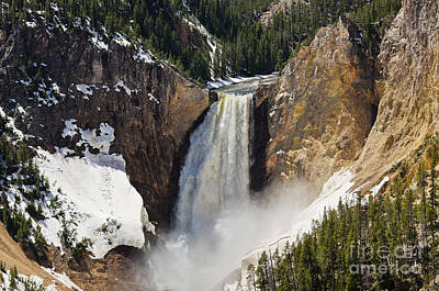 Lower Falls Of The Yellowstone Poster by Sue Smith