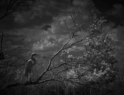 Loxahatchee Heron At Sunset Poster by Bradley R Youngberg
