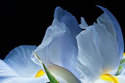 Poster featuring the photograph Lt Blue Iris 2013 by Art Barker