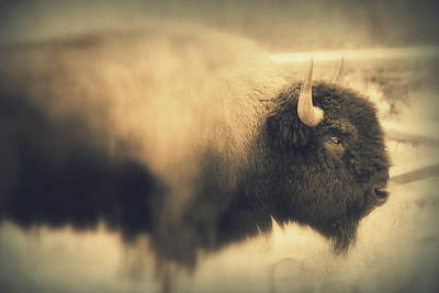Poster featuring the photograph Lucky Yellowstone Buffalo by Lynn Sprowl
