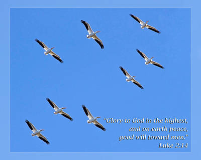 Luke 2 14 Poster by Dawn Currie