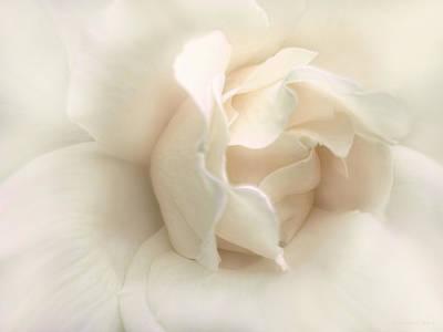 Luminous Ivory Rose Flower Poster