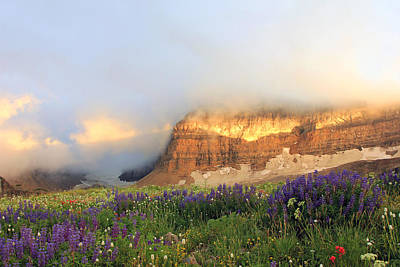 Lupine Wildflowers On Mount Timpanogos Poster