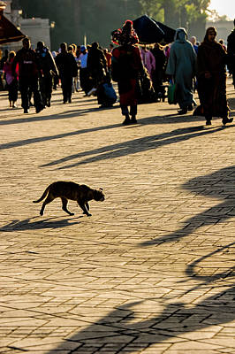 Lurking Cat In The Jemaa El Fna Square Marakesh Poster by David Smith