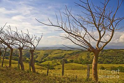 Lush Land Leafless Trees 2 Poster