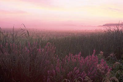 Lustrife Sunrise Great Meadows Concord Ma Poster by Bucko Productions Photography