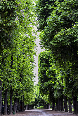 Luxembourg Tree Avenue In Paris Poster by Georgia Fowler