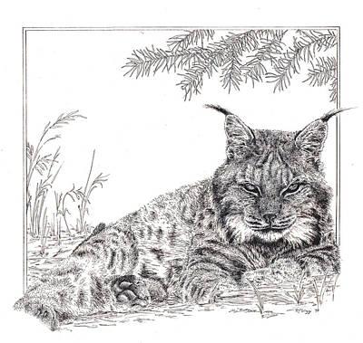 Lynx Poster by Rita Polizzi