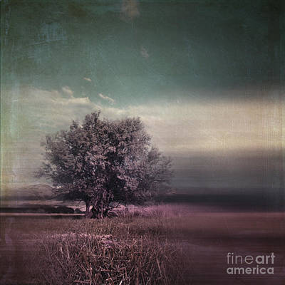 Lyrical Tree - C01dt01 Poster by Variance Collections