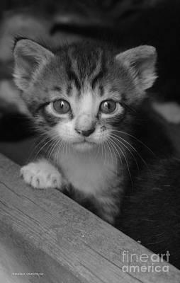 M Kitten Poster by Tannis  Baldwin