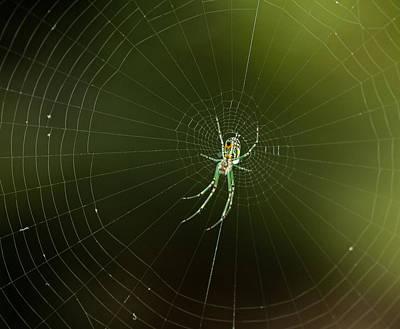 Mabel Orchard Spider Poster by Lara Ellis